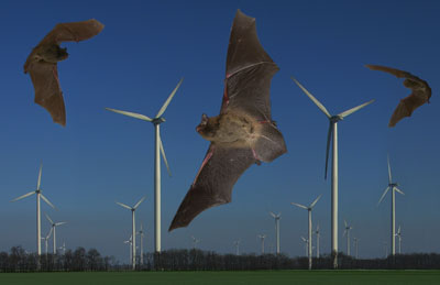 Bats and wind farms