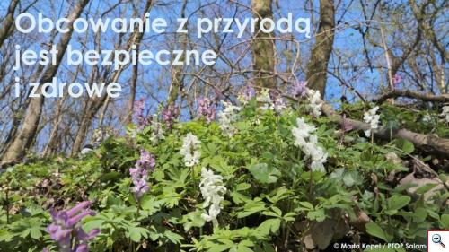 kokorycze 1
