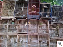 ptaszki w klatkach1
